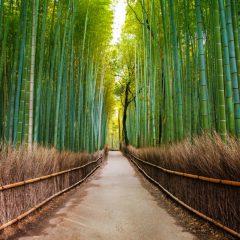 עץ הבמבוק